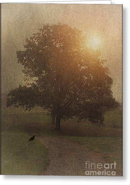 Best Selling Bird Art Greeting Cards - A Road Less Traveled Greeting Card by Tom York Images