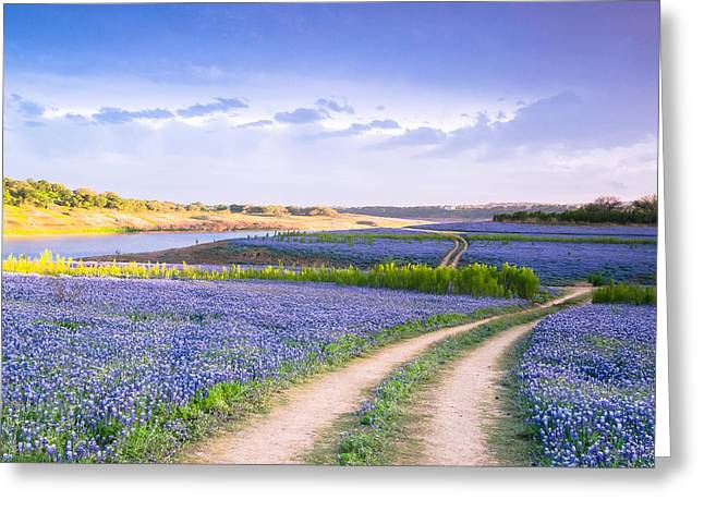 Evening Greeting Cards - A Road to Bluebonnet Heaven Greeting Card by Ellie Teramoto