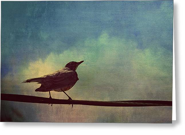 American Robin Greeting Cards - A Robin Sings A Serenade Hanging On A Wire  Greeting Card by Maria Angelica Maira