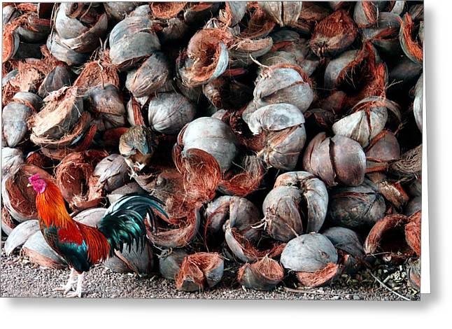 Justin Woodhouse Greeting Cards - A Rooster and his Coconuts Greeting Card by Justin Woodhouse