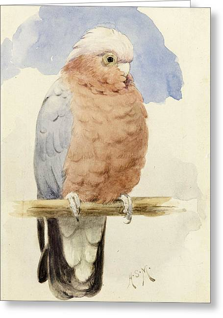 Wild Parrots Greeting Cards - A Rose Breasted Cockatoo Greeting Card by Henry Stacey Marks