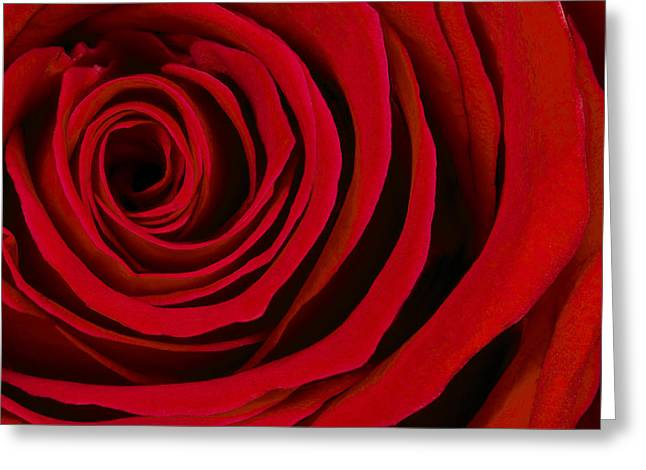 Up Close Greeting Cards - A Rose for Valentines Day Greeting Card by Adam Romanowicz