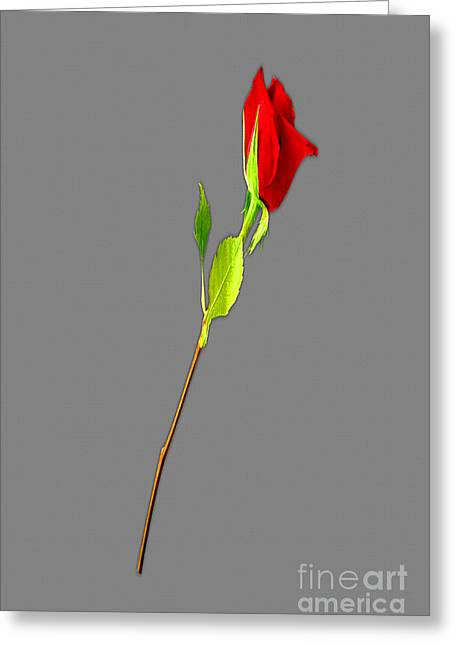 Installation Art Greeting Cards - A Rose Is A Rose Is A Rose Greeting Card by Tina M Wenger