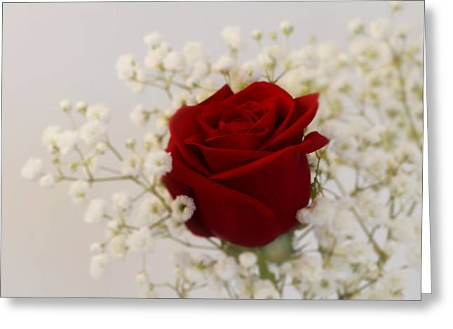 Intrigue Greeting Cards - A Rose is A Rose Greeting Card by Kim Hojnacki