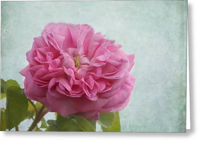 Sweetness Greeting Cards - A Rose Greeting Card by Kim Hojnacki