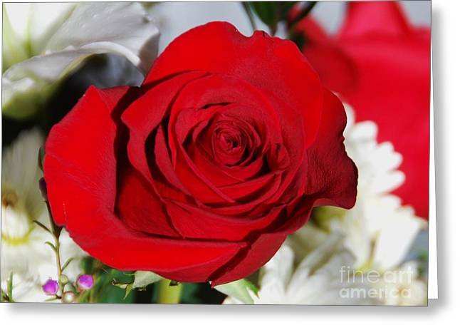 Pillow With Roses Greeting Cards - A Rose Greeting Card by Marcus Dagan