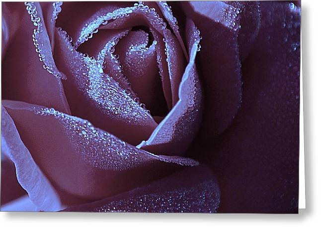A Rose That Glitters Greeting Card by Michelle Ayn Potter