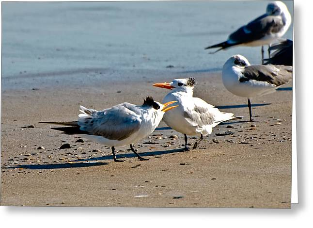 Tern Greeting Cards - A Royal Pair Greeting Card by Rich Leighton