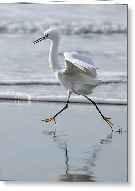 Santa Cruz Greeting Cards - A Run on the Beach Greeting Card by Bruce Frye