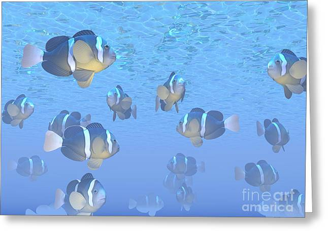 Yellowtail Clownfish Greeting Cards - A School Of Clownfish Swimming Greeting Card by Elena Duvernay