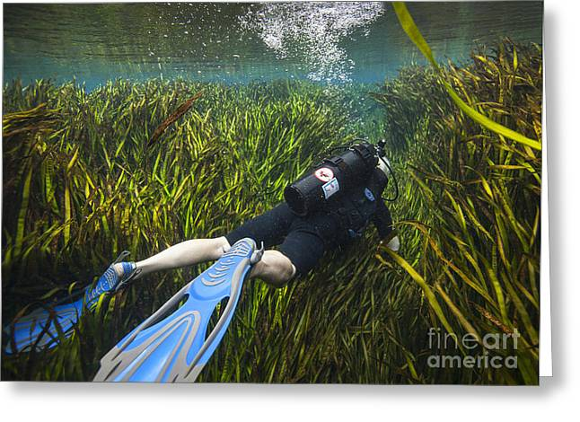 Scuba Diving Greeting Cards - A Scuba Diver Swims Through An Greeting Card by Michael Wood