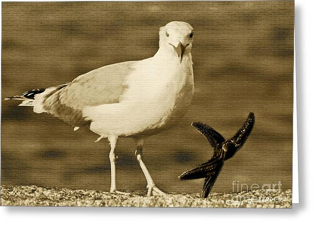 Seagull With Starfish Greeting Cards - A Seagull Kind of Day Greeting Card by Carol F Austin