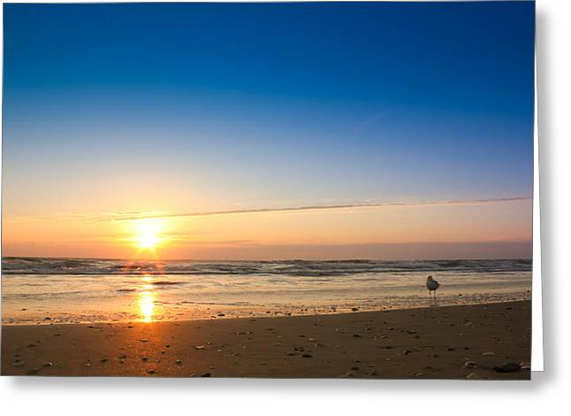 Atlantic Beaches Greeting Cards - A Seagull Watching the Atlantic Sunrise Greeting Card by Anthony Doudt