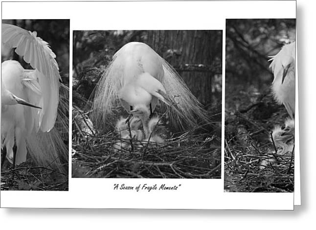 Chick Photographs Greeting Cards - A Season of Fragile Moments Greeting Card by Suzanne Gaff