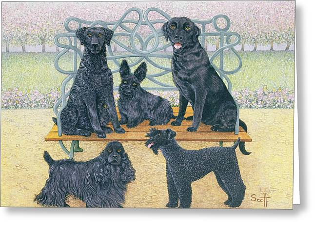 Collie Greeting Cards - A Seat In The Park Greeting Card by Pat Scott