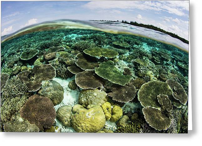 A Shallow Coral Reef Thrives Greeting Card by Ethan Daniels