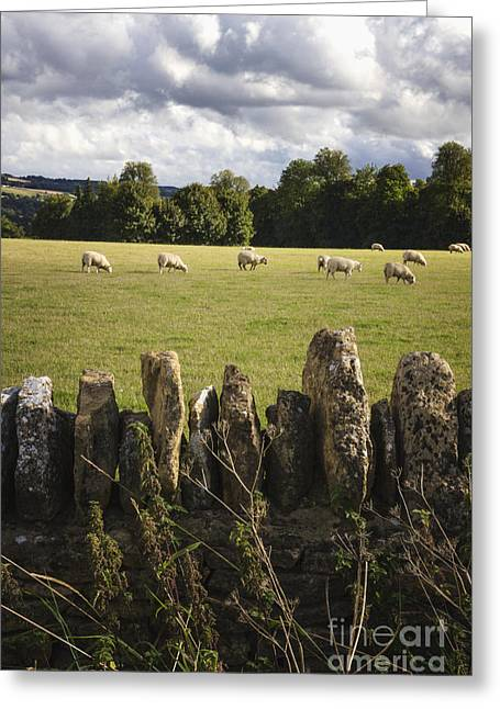 Stone Fence Greeting Cards - A Sheeps Field Greeting Card by Margie Hurwich