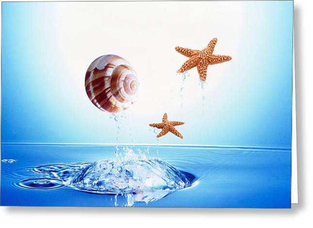 Abstract Movement Greeting Cards - A Shell And Two Starfish Floating Greeting Card by Panoramic Images