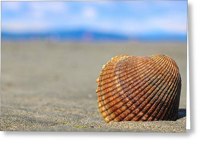 My Ocean Greeting Cards - A Shells Perspective Greeting Card by Megan Kollman