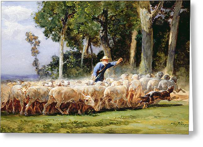 Collie Greeting Cards - A Shepherd With A Flock Of Sheep Greeting Card by Charles Emile Jacques