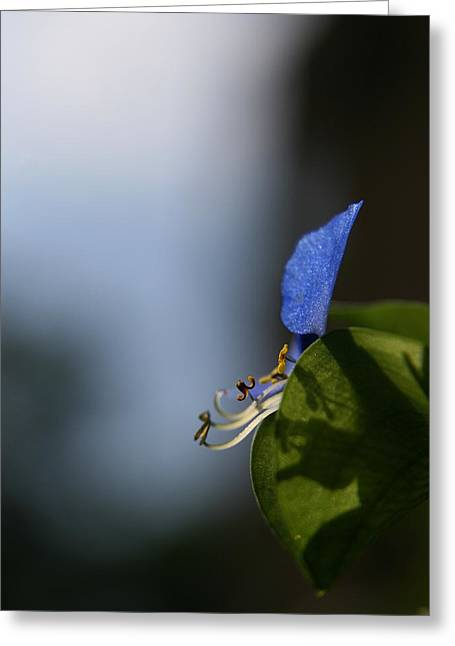 Wildflowers Greeting Cards - A Side of Commelina Communis  Greeting Card by Neal  Eslinger