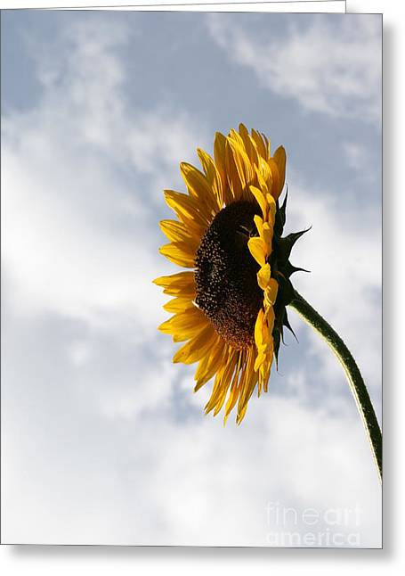 Wildflower Photography Greeting Cards - A Side of Sunflower Greeting Card by Neal  Eslinger