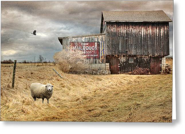Barn Digital Greeting Cards - A Sign of the Times Greeting Card by Lori Deiter