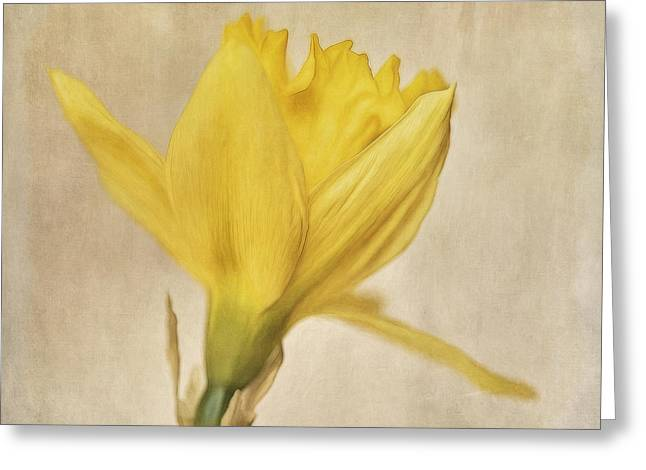Daffodil Greeting Cards - A Simple Daffodil Greeting Card by Priska Wettstein