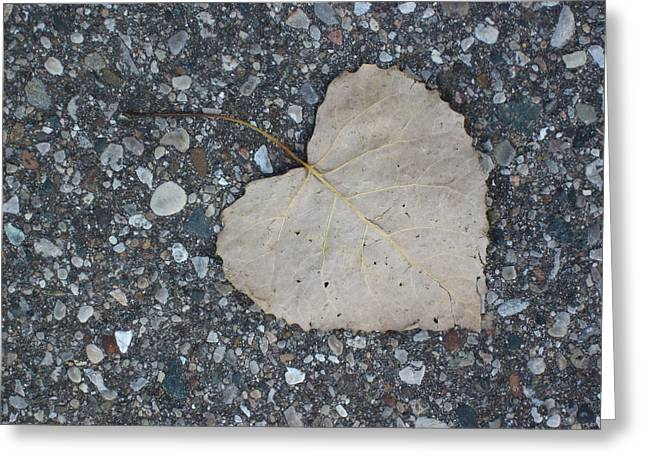 Guy Ricketts Photography Greeting Cards - A Single Leaf Greeting Card by Guy Ricketts