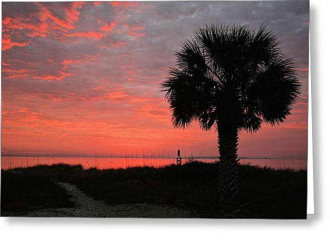 Florida Panhandle Greeting Cards - A Single Palm Florida Sunrise Greeting Card by JC Findley
