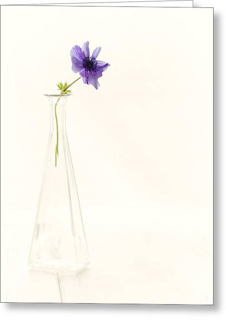 Glass Vase Photographs Greeting Cards - A single thought Greeting Card by Constance Fein Harding