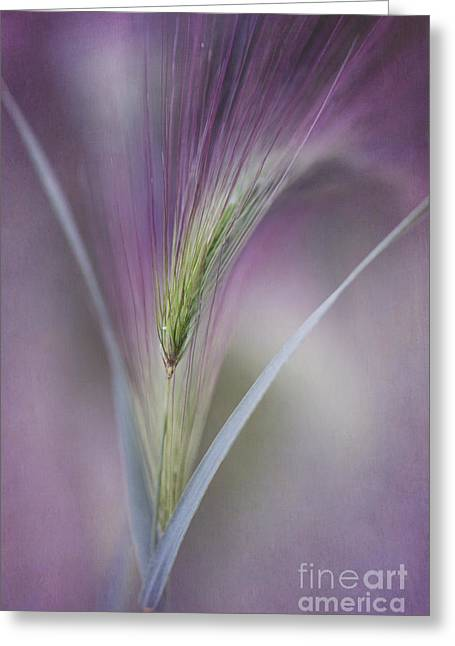 Textured Floral Greeting Cards - A Single Whisper Greeting Card by Priska Wettstein