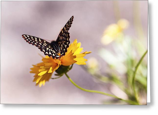 Secret Gardens Greeting Cards - A Sip of Coreopsis Greeting Card by Caitlyn  Grasso