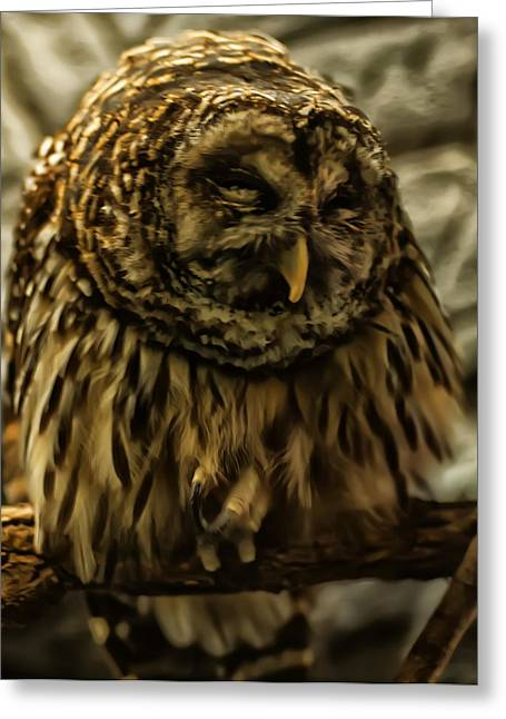 Owl Picture Greeting Cards - A Sleeping Barred Owl Greeting Card by Chris Flees