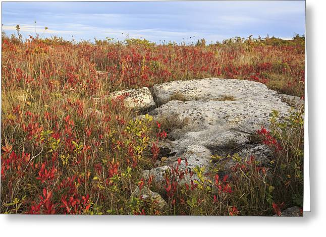 Dolly Sods Wilderness Greeting Cards - A Slice of Sods Greeting Card by Jennifer Grover