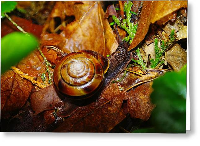 A Slow Snail Greeting Card by Jeff Swan