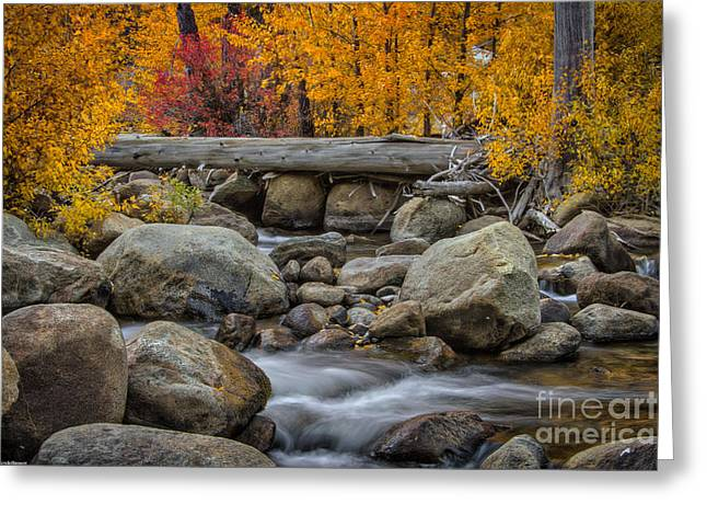 West Fork Greeting Cards - A Slow Turning Greeting Card by Mitch Shindelbower