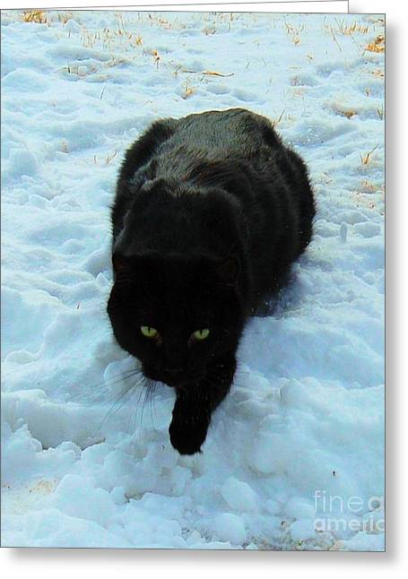 Photos Of Cats Photographs Greeting Cards - A small Panther in the Snow Greeting Card by Cheryl Poland