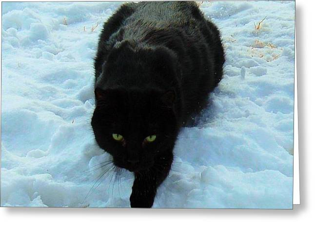 A small Panther in the Snow Greeting Card by Cheryl Poland