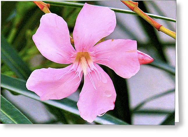 Pink Flower Prints Pyrography Greeting Cards - A small pink flower Greeting Card by Girish J