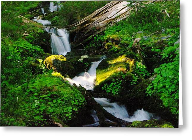 Forest Floor Greeting Cards - A Small Slice Of Paradise Greeting Card by Jeff  Swan