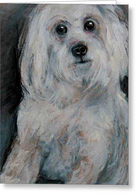 Maltese Drawings Greeting Cards - A Small White Puppy Greeting Card by Jean Cormier