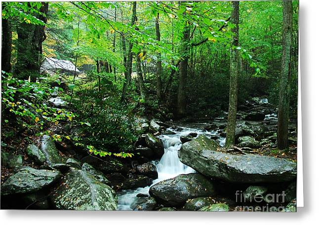 Moss Green Greeting Cards - A Smoky Mountain Stream 2 Greeting Card by Mel Steinhauer