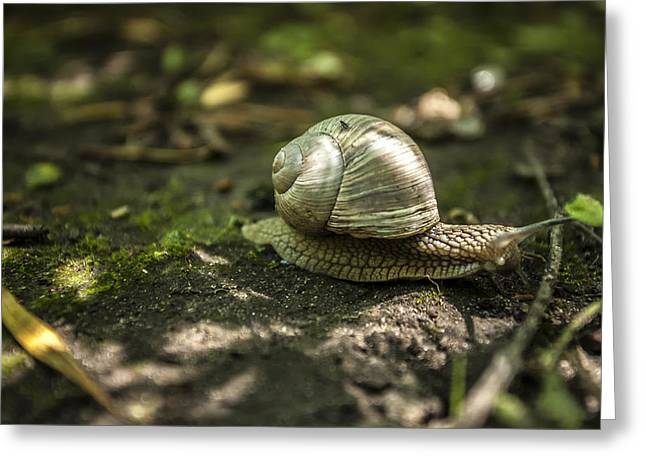 40mm Greeting Cards - A Snails Pace Greeting Card by CJ Schmit