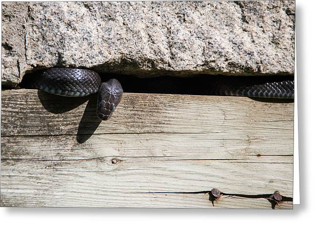 The Nature Center Greeting Cards - A Snake Among the Ruins Greeting Card by Kathi Isserman