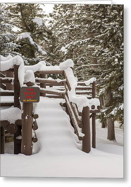 Pinus Resinosa Greeting Cards - A Snowy Fire Escape Greeting Card by Tim Grams