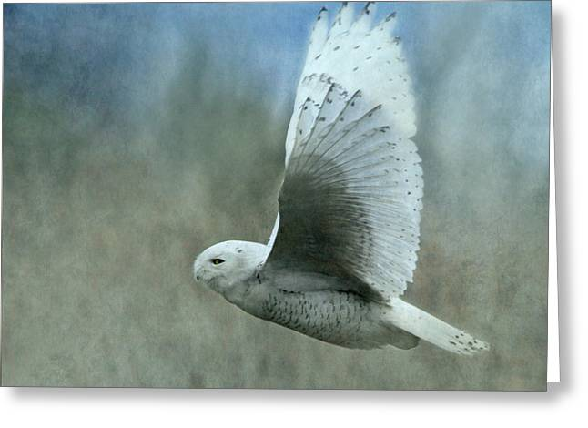Snowy White Owl Greeting Cards - A Snowy Flight Greeting Card by Angie Vogel