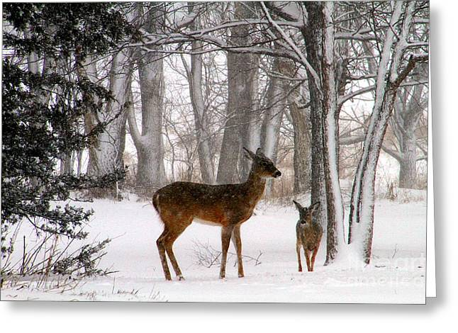 Chalco Hills Recreation Area Greeting Cards - A Snowy Path Greeting Card by Elizabeth Winter