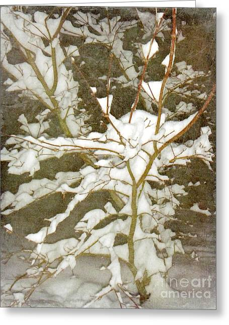 Snow Tree Prints Greeting Cards - A Snowy Tree Greeting Card by Alys Caviness-Gober