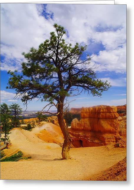 Southern Utah Greeting Cards - A sole tree in Bryce Canyon   Greeting Card by Jeff  Swan